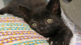 3645761605_dd610426ae_black-kitten