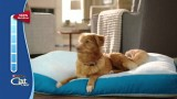 Cat Knicks Dogs Bed