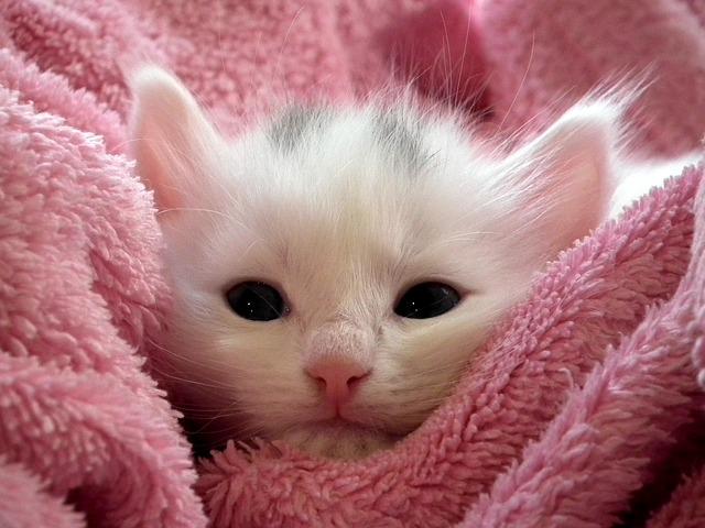 fluffy kitten photo