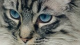 e527ceef6522c913c55121a8_640_fluffy-kitten